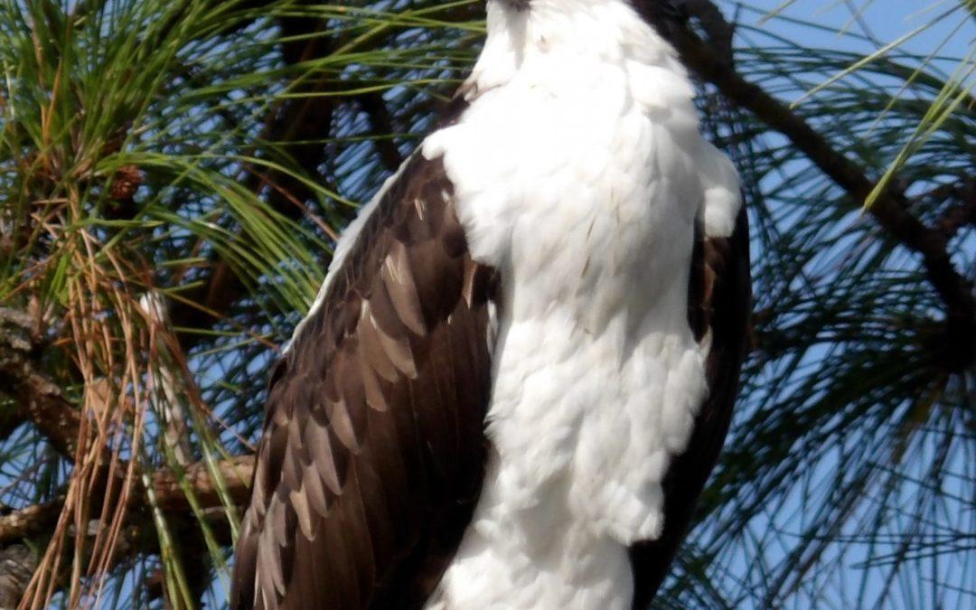 Bird Watching in Perdido Key